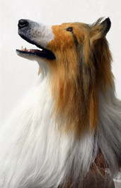 Lassie 2.jpg