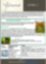 domaine dyckerhoff, reuilly, reuilly dyckerhoff, newsletter, wines, france, centre, sauvignon, pinot, news