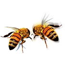apidae-queen-bee-icon-hd-bee-760bb80c35c