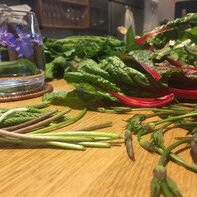 いろいろな野菜で、あふれています #無農薬 で、キレイかつ美味しいでっす__例えば、#ポップの新芽 _#エルバステッラの穂 #スイスチャード #ボリジ #よもぎ #明日葉 などなど__うーん#フリッ