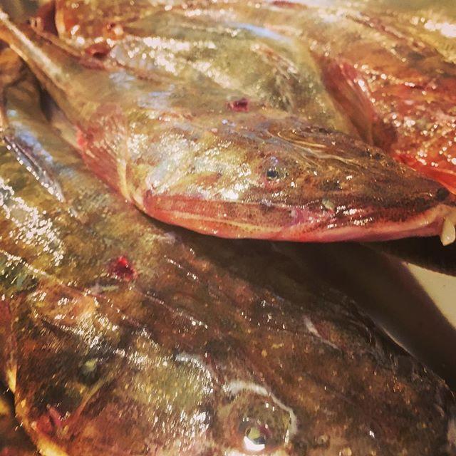 牛の尾のようなお魚_届きました〜_生でも煮ても美味なやつ_#マゴチ _#Piuma #ピウマ _#piuma #池尻 #三宿_#イタリア料理 _#イタリアワイン