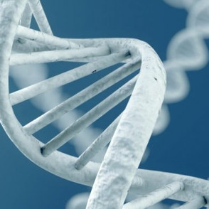 Гены и среда