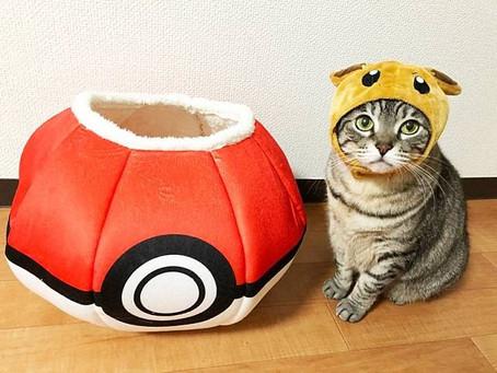 日本Petio推出「寶可夢寵物用品」~貓/狗奴們要注意,一齊用精靈球收服主子啦!