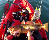 Catching Cod Video
