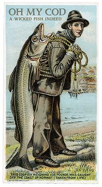 About Codfish