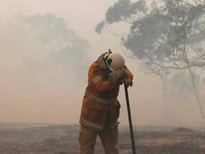 The Australian Bushfires: What's Happening & How You Can Help