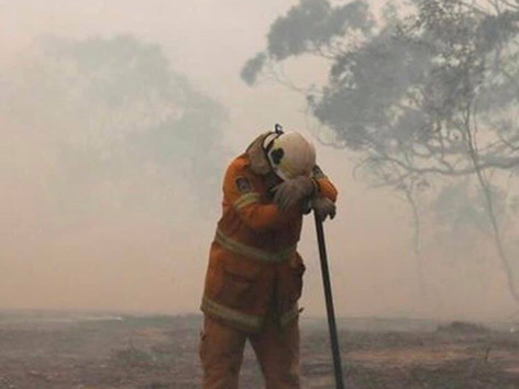 AUSTRALIAN BUSH FIRES: What's Happening & How You Can Help