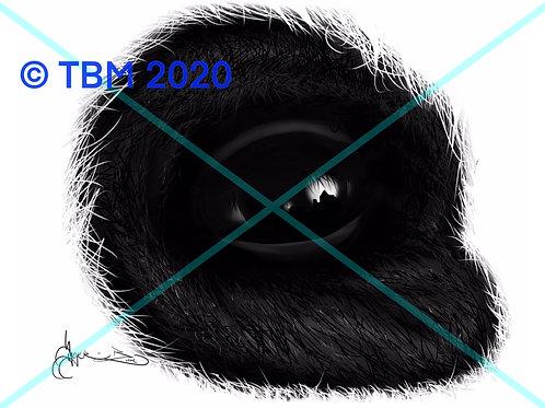 """""""Panda Eye"""" ©TBM2020 TygerB.com"""