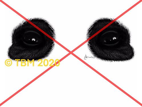 """Panda Eyes"" ©TBM2020 TygerB.com"