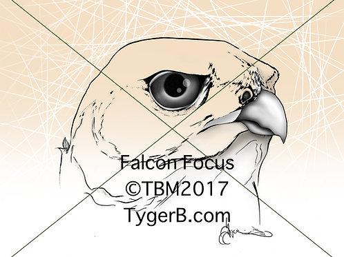 Falcon Focus ©TBM2017 TygerB.com