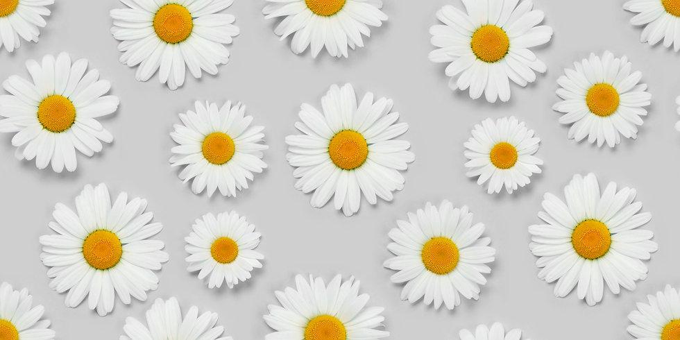 camomile-flower-seamless-texture-3L3KJR9