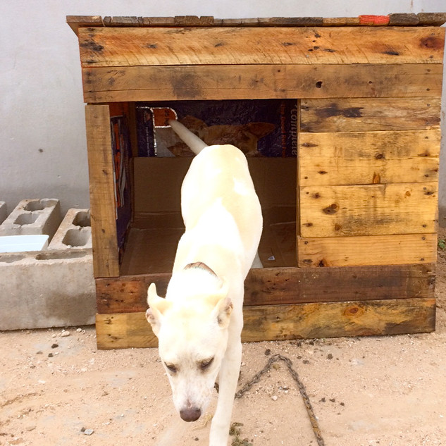 houses for hounds 2.jpg