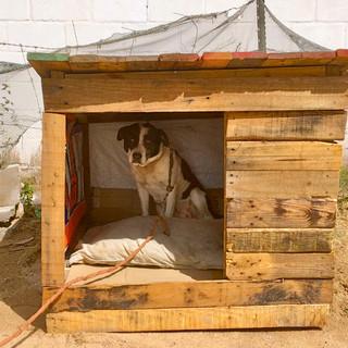 houses for hounds1.jpeg