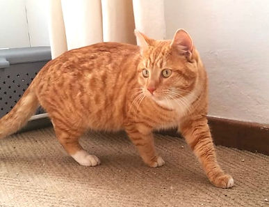 Ginger cat_edited.jpg