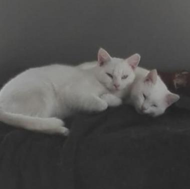 Brave foster mom turns adult ferals into household pets