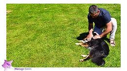 Massage canin manche
