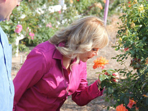 My Best Tips to Grow and Care For Roses