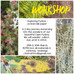 WORKSHOP •Fynbos•