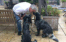 New York City dog trainer Jay Andors training Theo and Ziggy