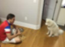 NYC dog training. New York City dog trainer Jay Andors trained happy dog Theo