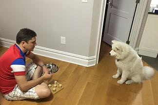 NYC dog training. Perfect Behavior Dog Training calm dogs