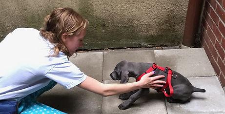 NYC dog training. Perfect Behavior Dog Training. Sweet puppy Ziggy.