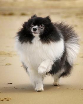 a20110613_dog beach_0013.jpg