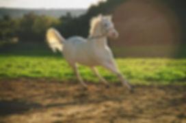 Marley running.jpg