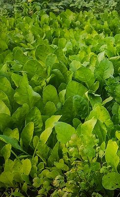 Organic_edited.jpg