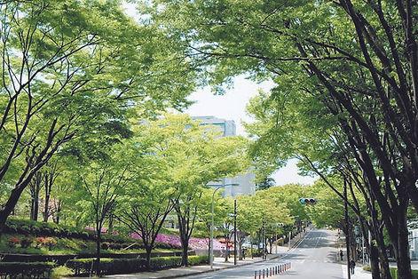 新緑 (東北大青葉山キャンパス)s.jpg
