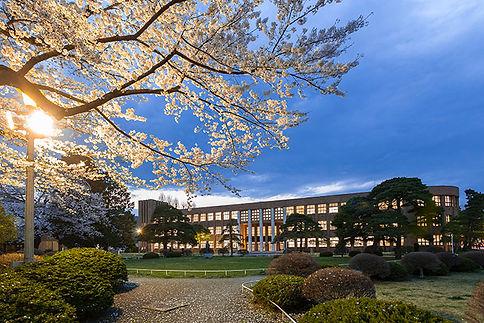桜夜景 (東北大片平キャンパス)s.jpg