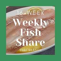 16 Week fish Share