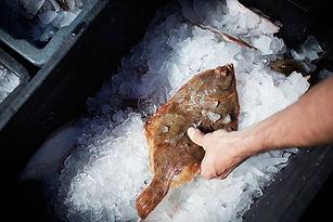 Dogfish-New-Hampshire-Fishermen-Fresh-Se