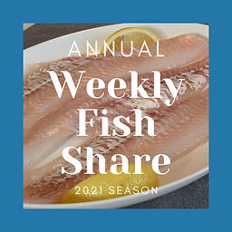 32 Week Annual Fish Share- best deal!