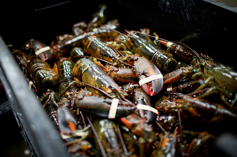 Local-New-England-Lobster-NH-Community-S