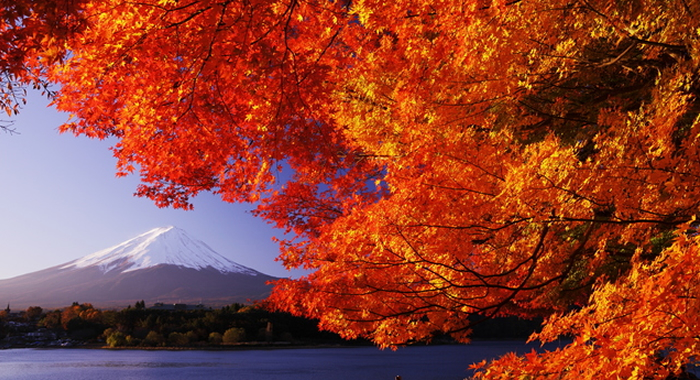 Image result for japan fall leaves