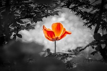 shutterstock orange flower.jpg