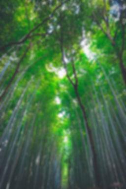 Meditation Wald