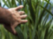 close-up-1852891.jpg