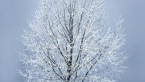 Cikli ali kako se pripraviti na poporodno zimo