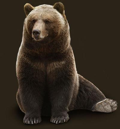 Avia bear Mansur