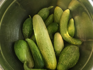 It's Pickle Time!