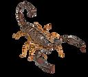 escorpião.png