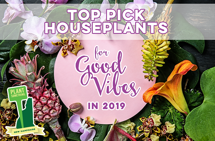 Top Pic Houseplants Good Vibes 2019.png