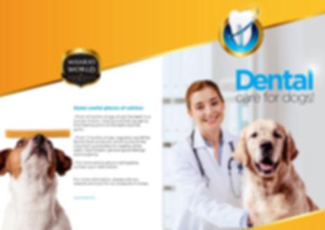 dental-care-01.jpg