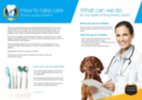 dental-care-02.jpg