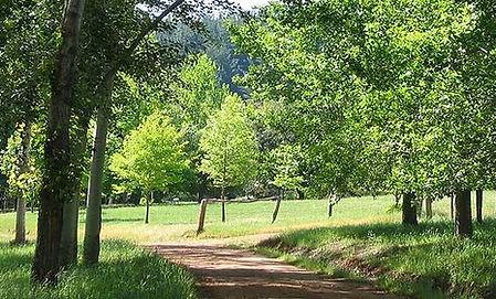 ravensbournetrees.jpg