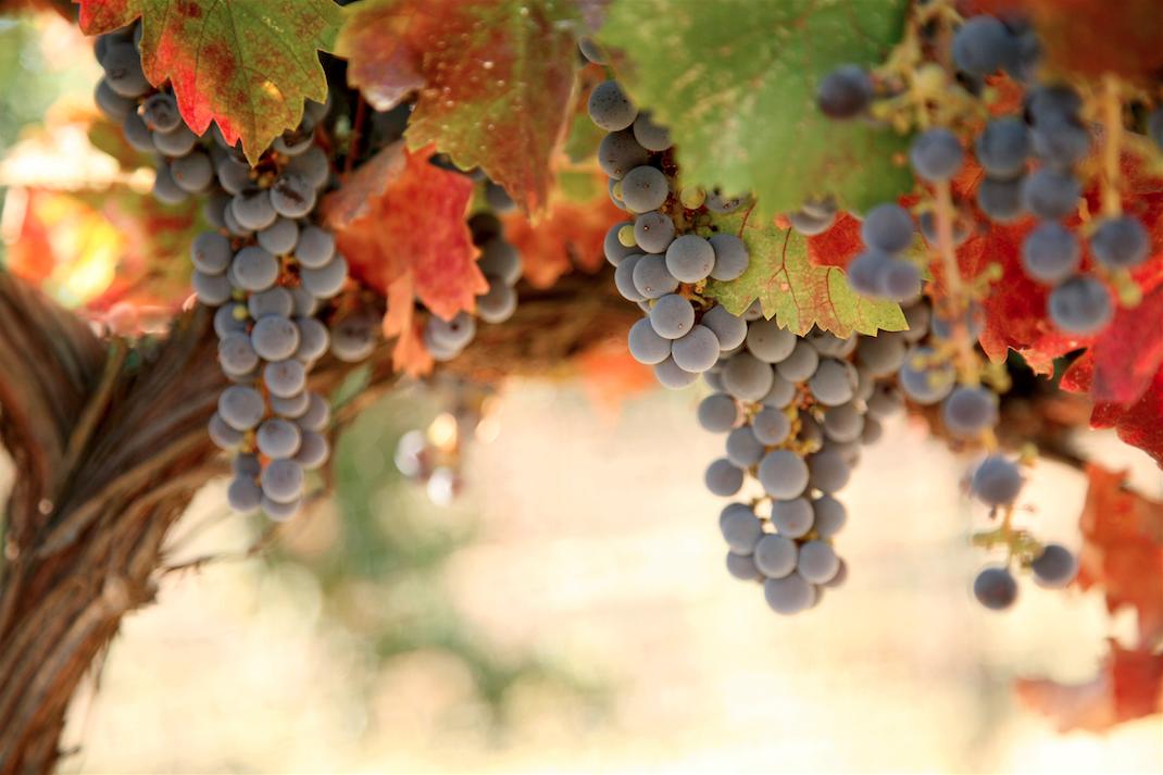 Delicious Grape Delights.jpg