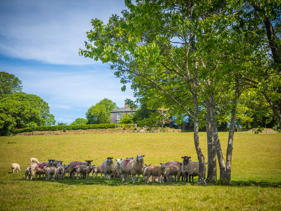 Organic Working Farm