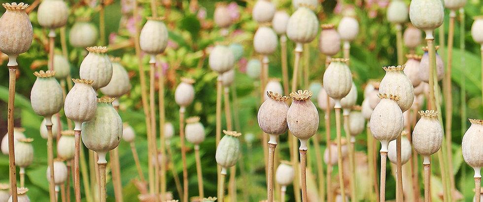 poppy-1540284_1920.jpg